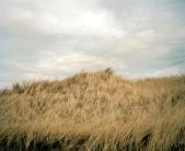 Town Beach by Maureen Drennan